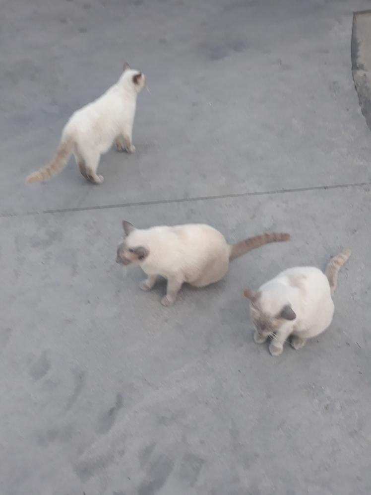 Cats D