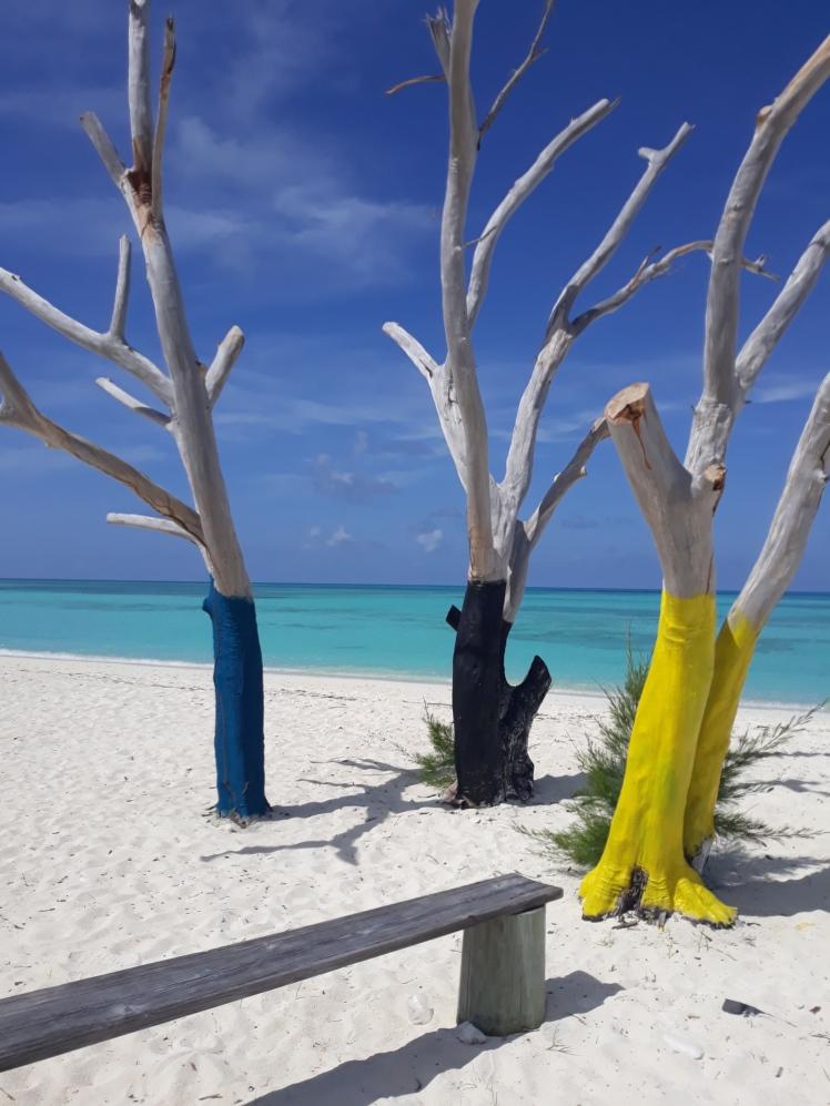 Bahamas trees